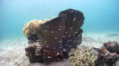 Ocean scenery on silty inshore reef, HD, UP27316 Stock Footage