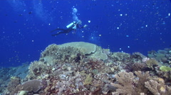 Point and shoot photographer swimming on wall in Solomon Islands, HD, UP27717 Stock Footage