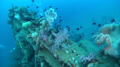 Ocean scenery deep wreck covered in fish and soft corals, on wreckage, HD, Stock Footage