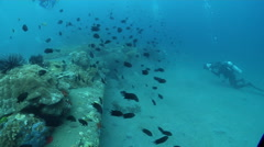 Videographer taking images on wreckage with Spiny chromis in Solomon Islands, Stock Footage