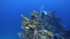 Tropical male model scuba diver swimming on wreckage with Elephant ear sponge in Stock Footage