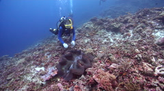 Group of scuba divers on deep coral rubble with Giant clam in Solomon Islands, Stock Footage