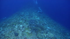 Distant group of scuba divers swimming on deep coral reef with Bigeye trevally Stock Footage
