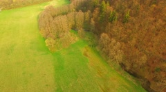 Beautiful forest and green meadows - stock footage