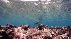 Ocean scenery indigenous fishing, dugout canoe paddling away, on shallow coral Stock Footage