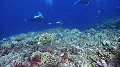 Group of scuba divers swimming on deep coral reef in Solomon Islands, HD, Stock Footage