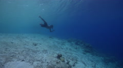 Local spearfisherman looking for fish, takes a shot, underwater, HD, UP27600 Stock Footage