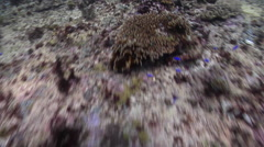 Ocean scenery fast drift shooting down, on shallow coral reef, HD, UP27258 Stock Footage