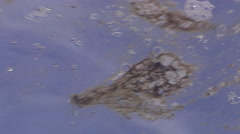 Ocean scenery coral spawn slick, on water surface, HD, UP27875 - stock footage