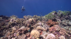 Full face mask diver drifting on shallow coral reef in Solomon Islands, HD, Stock Footage