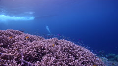 Ocean scenery tracks skiff driving 15 feet above diver, on shallow coral reef, Stock Footage