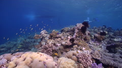 Tropical male model scuba diver swimming on very shallow reef and surface in Stock Footage