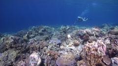 Tropical male model scuba diver swimming on shallow coral reef in Solomon Stock Footage