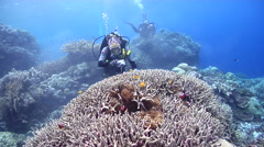 Point and shoot photographer taking images on shallow coral reef with Bulb Stock Footage
