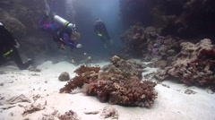 Point and shoot photographer on shallow coral reef with Reticulated damsel - stock footage