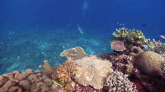 Ocean scenery looking down over nice hard coral diversity, on beautiful healthy Stock Footage