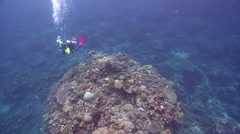 Colourful model scuba diver swimming on shallow coral reef in Solomon Islands, Stock Footage