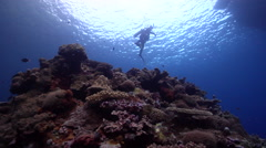 Buddy team of scuba divers ascending on shallow coral reef in Solomon Islands, Stock Footage