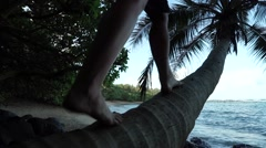 Girl Climbs Coconut Palm Tree on Beach in Tropical Hawaiian Paradise - stock footage