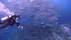 Photographer and model swimming on coral reef with Bigeye trevally in Solomon Stock Footage