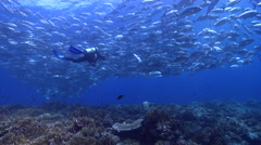 Housed SLR photographer swimming on shallow coral reef with Bigeye trevally in Stock Footage