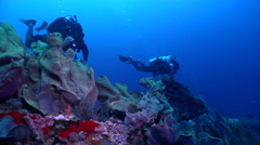 Buddy team of scuba divers swimming on wreckage with Elephant ear sponge in Stock Footage