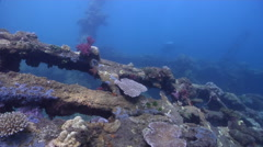 Ocean scenery WWII, World War 2 Japanese freighter, on wreckage, HD, UP28043 Stock Footage