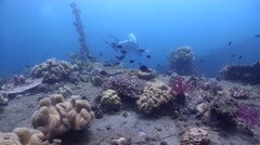 Videographer swimming on wreckage in Solomon Islands, HD, UP28049 Stock Footage