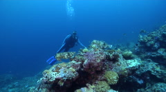 Diver focused on primary critter hovering on deep coral reef with Broadclub - stock footage
