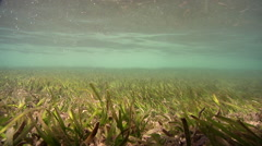 Ocean scenery very shallow, small wave surge wobbles, on seagrass meadow, HD, Stock Footage