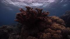 Ocean scenery dark, overcast, gloomy, chunky tough hard coral, on shallow coral Stock Footage