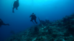 Group of divers watching ascending on deep coral reef with Olive sea snake in Stock Footage