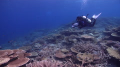 Videographer taking images on shallow coral reef in Australia, HD, UP28487 Stock Footage