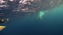Minke whale swimming in bluewater, Balaenoptera acutorostrata, HD, UP28560 Stock Footage