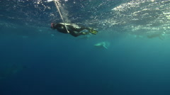 Diver interacting with wildlife swimming in bluewater with Minke whale in Stock Footage