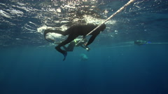 Snorkellers on surface rope swimming in bluewater with Minke whale in Australia, Stock Footage
