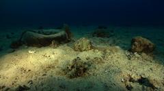 Chinese seasnake hunting on silty inshore reef, Laticauda semifasciata, HD, Stock Footage