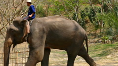 Elephant with man riding on top walking down the hill Stock Footage