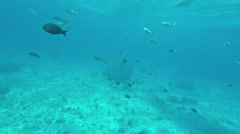 Underwater static scene with many moving fishes. Thailand. Similan islands. Stock Footage