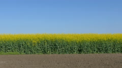 Agriculture, blossoming canola field - stock footage