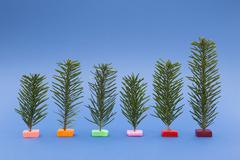 Variety of small Christmas trees on blue background - stock photo