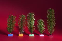 Variety of small Christmas trees on maroon background Stock Photos