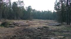 Deforestation. firewood Stock Footage