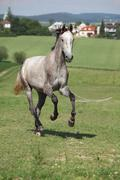 Amazing young horse running on pasturage Stock Photos