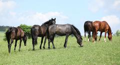 Nice herd of horses together on pasturage - stock photo