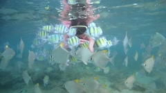 Young woman with hand feeding school of fish Indo-Pacific sergeant (Abudefduf - stock footage