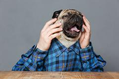 Desperate sad pug dog with man hands sitting and crying - stock photo