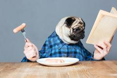 Man with pug dog head eating sausages and reading book Kuvituskuvat