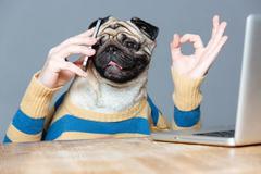 Happy man with pug dog head talking on cell phone Kuvituskuvat