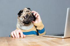 Amazed man with pug dog head talking on mobile phone - stock photo